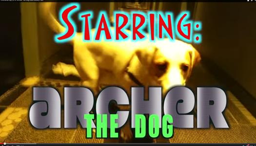 Archer The Dog
